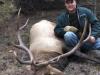 marks-elk